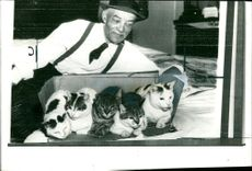 The five cats which have been left a legacy .