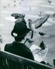 Pigeons sitting on the hat of a man and on the newspaper man reading.