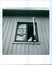 Cat sitting at the window of a building.
