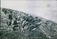1904  A vintage photo of soldiers holding gun and firing during the war.