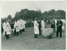Royal Norfolk Show: Grand Parade of Sheep