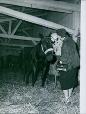 Year ?  Man holding child kissing horse in the stable.