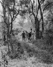 A group of people walking out of the jungle.