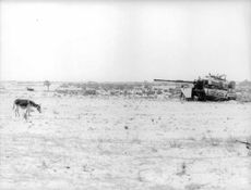 A military tank and a donkey on the plains.