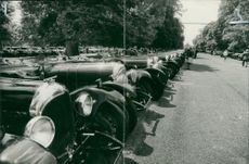 Bently cars lined up at blemheim place.