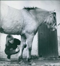 Woman brushing hairs of the horse.