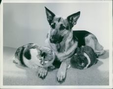 Dogs with other animals, cat and a rabbit siting together.