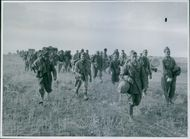 Prisoners coming in after the battle for the Wadi Akarit. 1943.