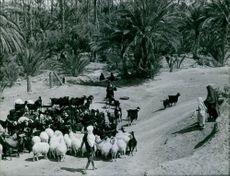 People in street with their animals in Tunisia.