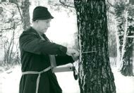 The data collector Professor Bengt Jonsson reads annuals on a tree