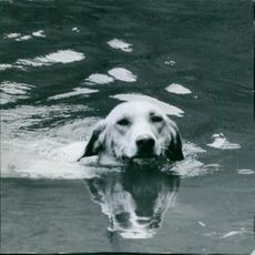 Dog swimming in water.