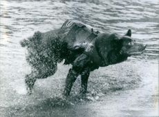 Dog wearing a life vest, shaking his body out of water.