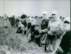 Vintage photo of women with their face covered planting in Spain.