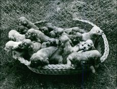Puppies in the basket.