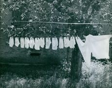 Clothes hanging on the rope for drying.
