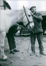 Two men standing beside a horse and talking to each other while looking at him.