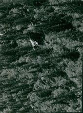 Top view of a plane crashed in the trees.  Taken - Circa 1969