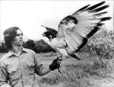 "Robert Kennedy Jr. With a hawk during the recordings of the television series ""The Last Frontier"""