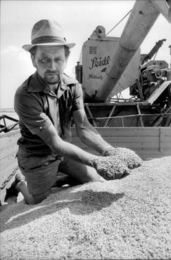 Wilfried Fremling with his grain harvest