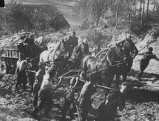 Soldiers pulling the rope to help the horses in transporting goods.  - 1942