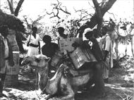 Red Cross aid supplies transported by camel in Sudan.