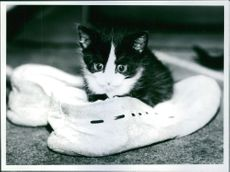 Kitten is lying on a shoes.