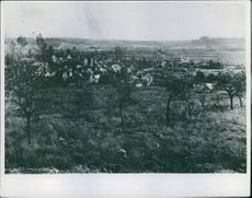 A view of houses in the forest in France during World War I, 1918.