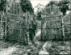 A fortified entrance with bamboo fence and spikes during Vietnam War