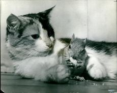 Cat adopts squirrel.