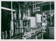 Pharmacy's new factory. The bottles pass under the cutting machine