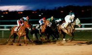 Five full-blooded full-blooded career at Galoppderby on the Täby racecourse