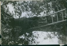 A soldier standing on a ladder placed on the tree, 1914.