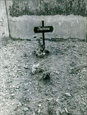 Photograph of a grave.