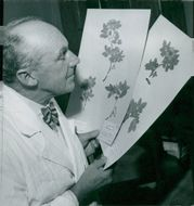 Professor E. Hultén with some of the rose samples from the museums collections