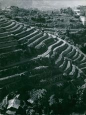 High angle view of terraced field.