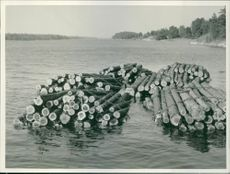 Stack of timber trails floating in water.