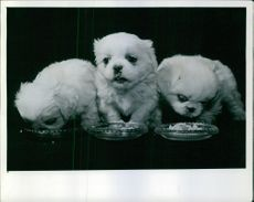 A portrait of three little pekes....then the one in the middle stands up while the two on the outside eat for a while.