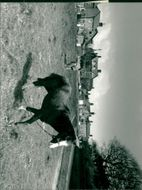 View of horse in the field.