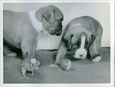 A photo of puppies.