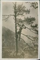 A soldier using his telescope on top of a  tree.