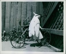 A parrot sitting on a cycle.
