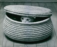 A cat hiding in the basket. 1968.