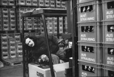 A warehouse worker moves a pallet with the beer Sturmbier aus Straubing