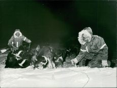 Men with dogs on snowy field.