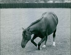 Picture of horse in garden, eating grass.