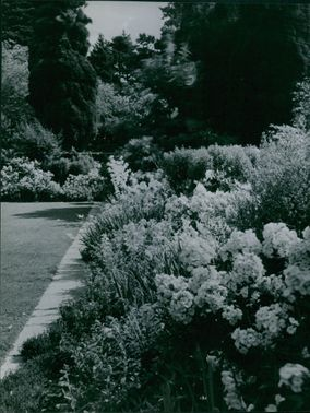 View of flowers in a garden.
