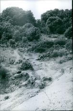Rocky field and trees. 1969