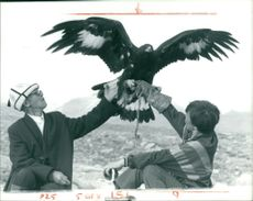 A trained golden eagle return to his master arm.