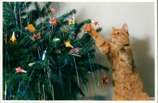 Samson the cat attacking a christmas tree.