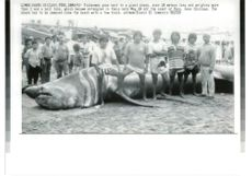 Fishermen pose next to a giant shark over 10 meters long.